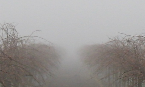 Foggy_january_in_the_central_valley_10